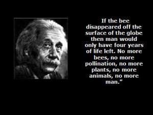 einstein_bees