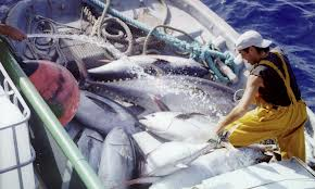 tonijnvanst